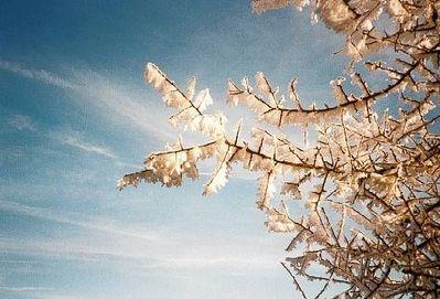 氷漬けの木01