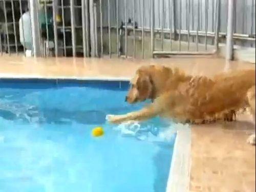 プールvs犬