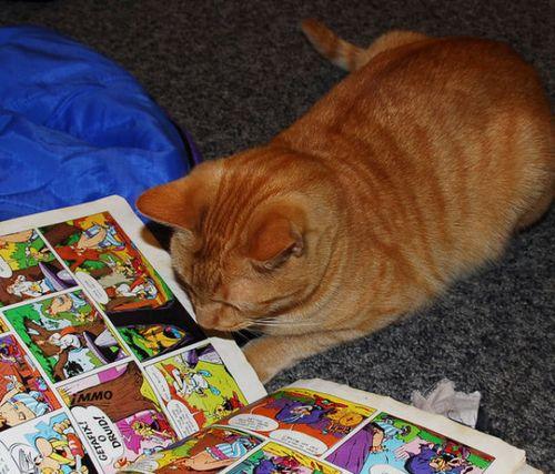 読書猫13