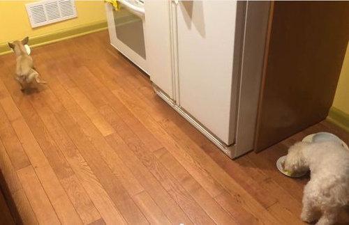 独りで食べるのが寂しい犬01