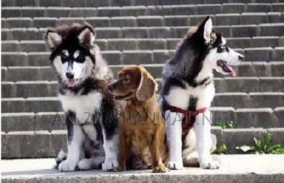 3匹の犬の成長04