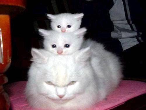 猫が太りすぎたと思うとき03