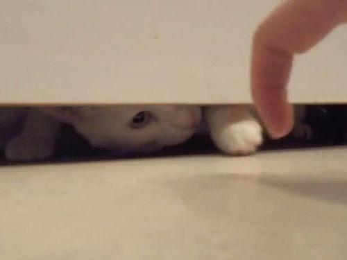 猫を幻惑する指01