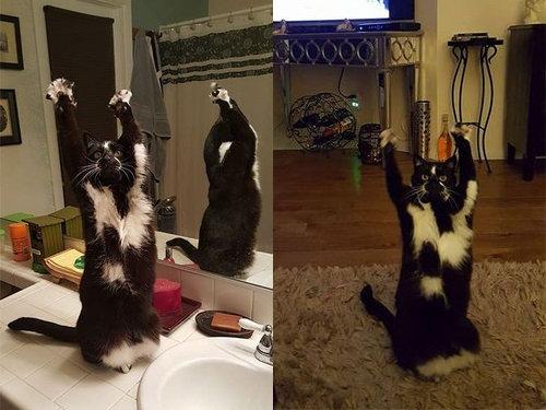 ばんざい猫00