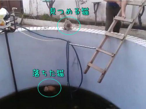 プールに落ちた猫をハシゴで救出00