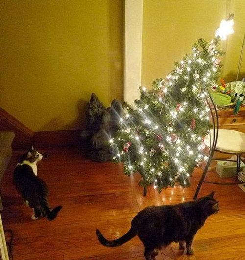 クリスマスとペット14
