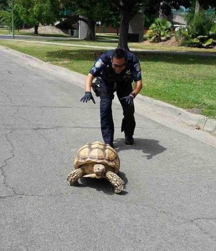 親しみが持てる警察官25