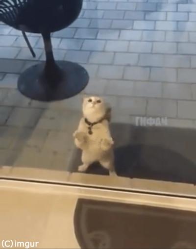 猫「ニャンで通れないの」03