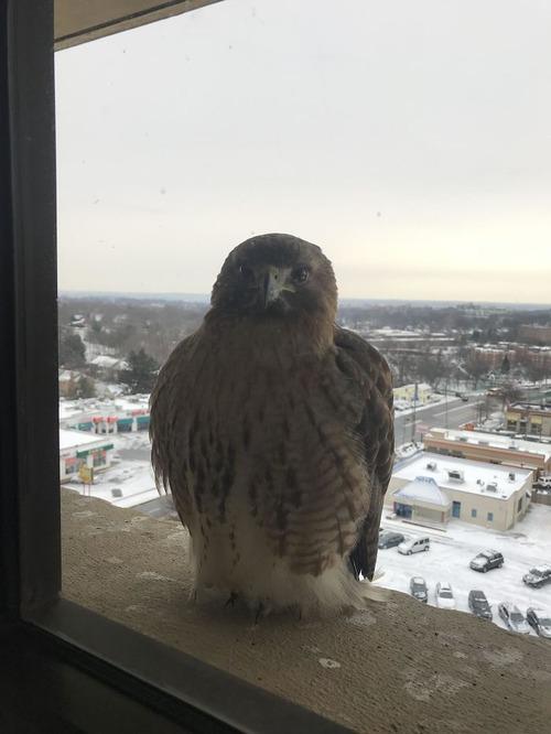 窓にやってきたお客さんたち01