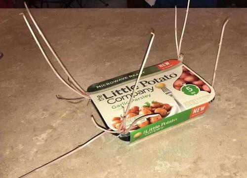 ジャガイモを放置して発芽してしまった例15