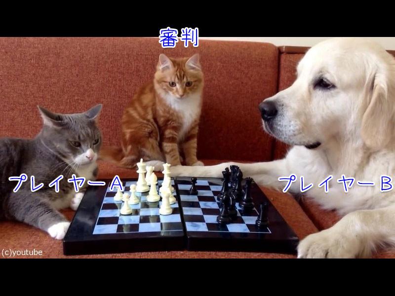 猫と犬がチェス対決、別の猫に審判をしてもらうと…こんな結果に終わる