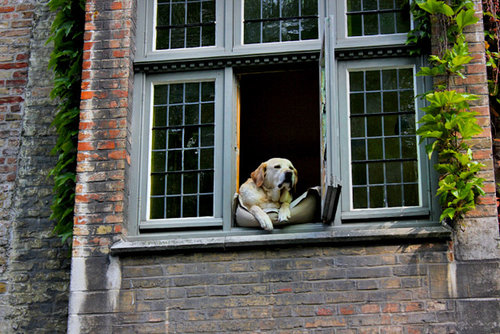 幸せそうな犬07