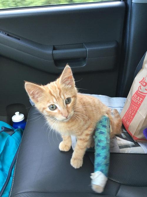 近所の猫が骨折した子猫を連れてきた04