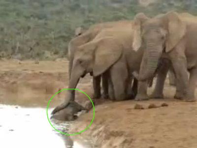赤ちゃんゾウの救出