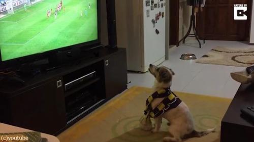 ゴールによろこぶ犬01