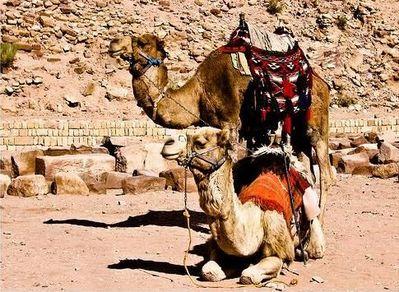 世界遺産ペトラ-ヨルダン08