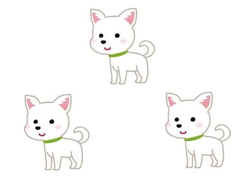 3匹の子犬00