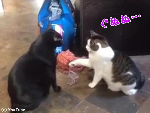 猫パンチしない猫00