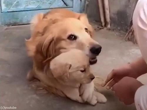 娘を溺愛するパパ犬00
