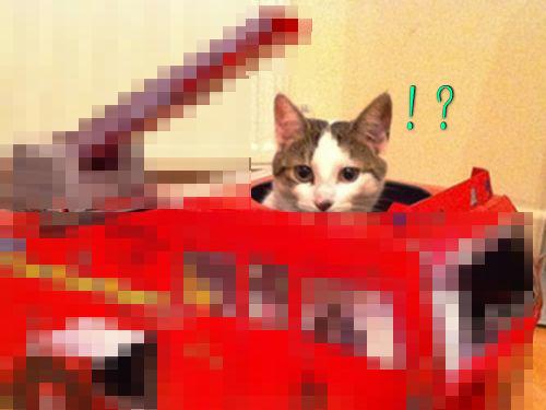 猫と乗り物00