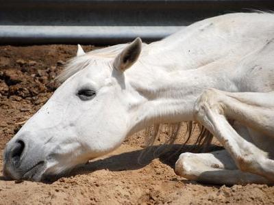政治を「乗っている馬が死んだとき」で例えると