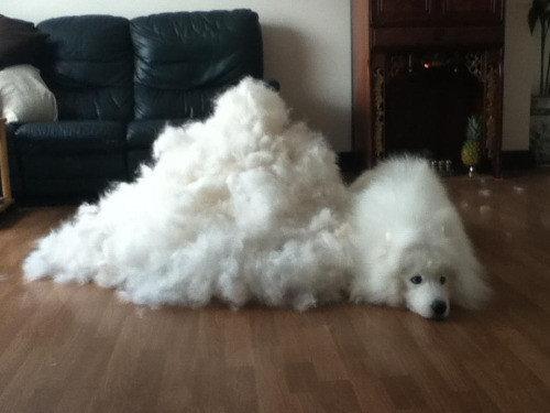 犬の毛変わり12