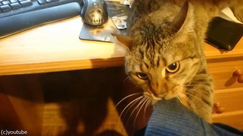 うちの猫のせいでパソコンが使えない03