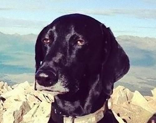 世界で最も感動の薄い犬03