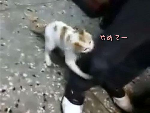 ケンカを止める猫00