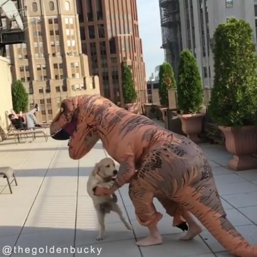恐竜が犬に襲い掛かってきた!02