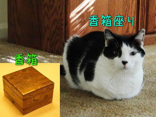 猫の「香箱座り」をパンの塊という理由00