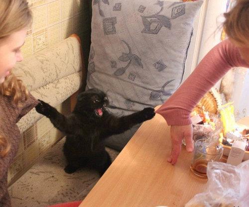 まだ猫をかわいいと思う01