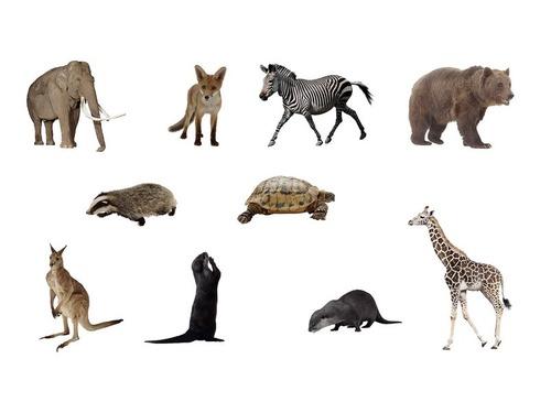 500歳まで生きる最長寿の脊椎動物00