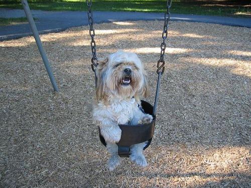 ブランコ犬12