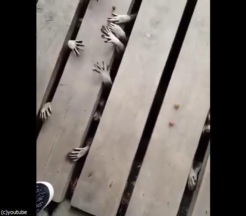 アライグマの恐怖01