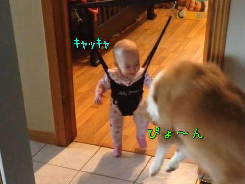 赤ちゃんにジャンプのしかたを教える犬00