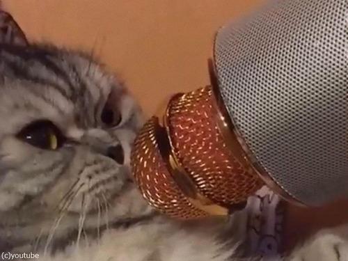 カラオケマイクと怒った猫02
