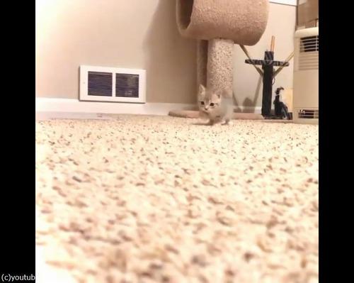 カメラにおそるおそる近づく子猫02