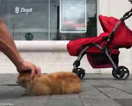 イスタンブールの猫03