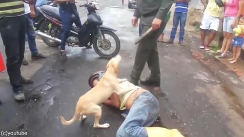 飼い主さんを全力で守る犬03