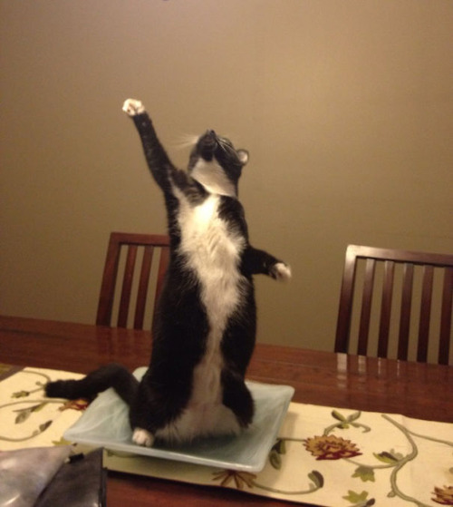 演技力の高い猫たち04