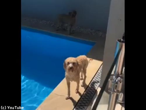 プール上がりの犬、なんてお利口さん…!00