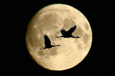 月の魔力02