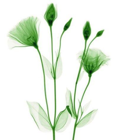 花のレントゲン19