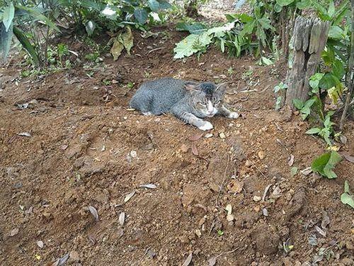 飼い主の墓に1年も居座り続ける猫04
