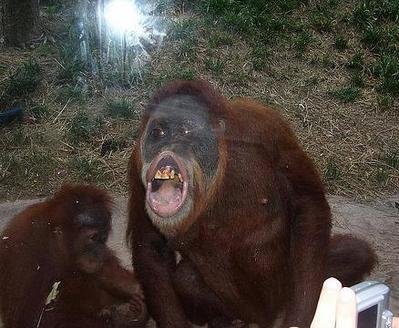 窓ガラスにへばりついて変顔になった動物たち18
