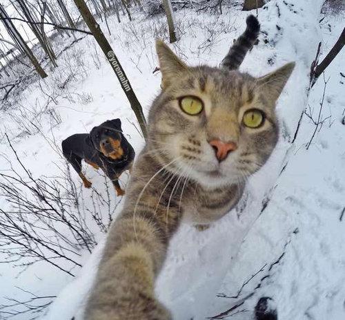 犬たちと一緒に自分撮りをする猫04
