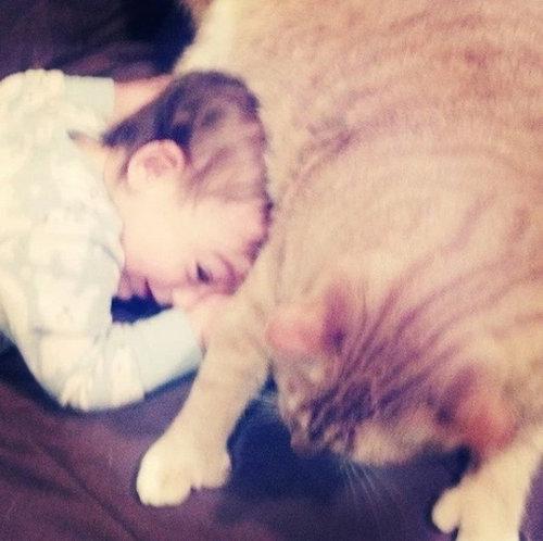 赤ちゃんの育ての親は猫01