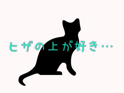 ヒザの上が好きな猫00