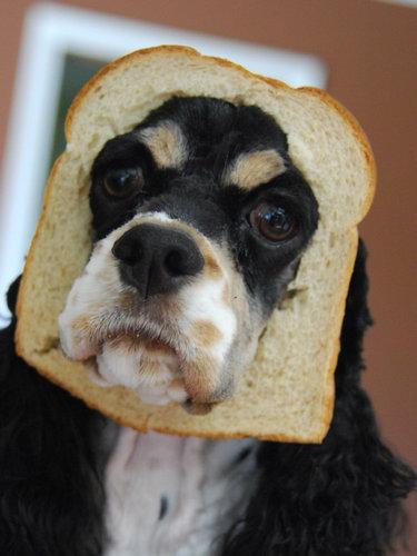 犬とパンの耳10